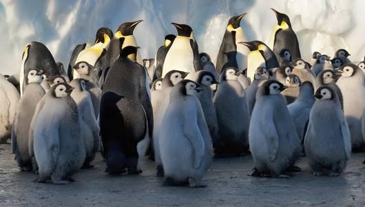 แกลอรีภาพ อัศจรรย์โลกน้ำแข็ง ตอน ฤดูหนาว