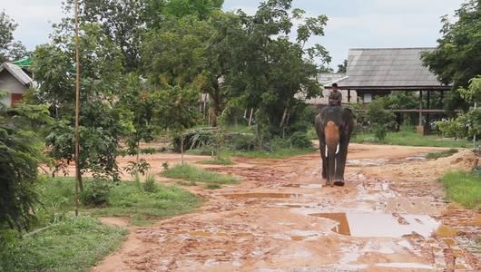 แกลอรีภาพ ฅ.ฅน ช.ช้าง