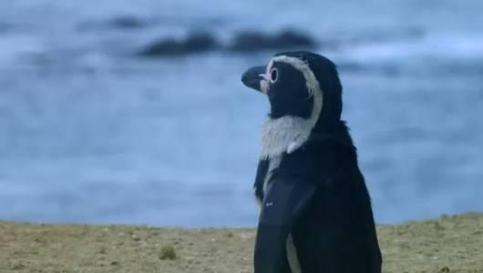 แกลอรีภาพ ล้วงลับชีวิตเพนกวิน ตอน เติบโต