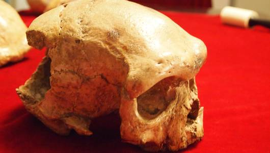 แกลอรีภาพ สืบสายมนุษย์จากยุคหิน