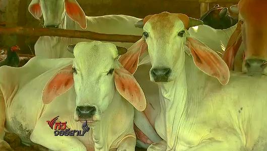 แกลอรีภาพ ปัญหาเนื้อวัวราคาแพง