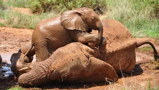 แกลอรีภาพ ติดชีวิตสัตว์ป่า ตอน ช้าง