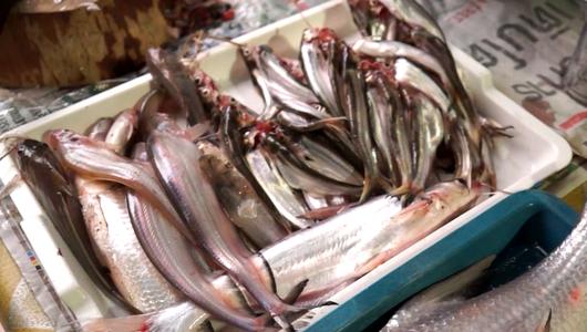 แกลอรีภาพ ปลาร้า