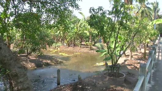 แกลอรีภาพ ปัญหาน้ำเค็มรุกเข้ามาในแม่น้ำเจ้าพระยาที่บางน้ำผึ้ง