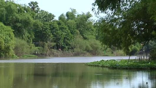 แกลอรีภาพ ปัญหาน้ำเค็มรุกแม่น้ำท่าจีน จ.สมุทรสาคร