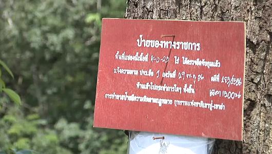 แกลอรีภาพ แผนพิทักษ์ทรัพยากรป่าไม้แห่งชาติ