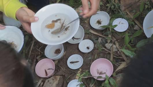 แกลอรีภาพ ตัวอ่อนแมลงเกาะหินตัวป้อม