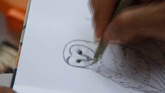 แกลอรีภาพ นกแสกผู้น่ารัก