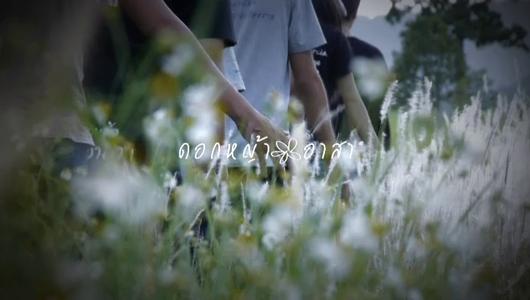 แกลอรีภาพ ดอกหญ้าอาสา