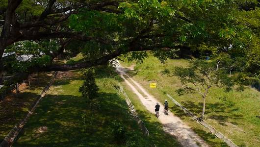 แกลอรีภาพ ป่าผ่าเมือง