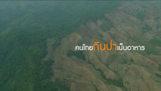 แกลอรีภาพ คนไทยกินป่าเป็นอาหาร