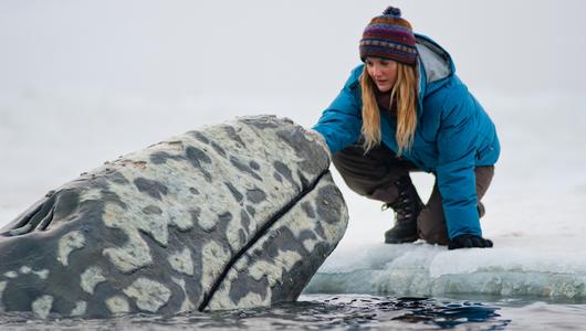 แกลอรีภาพ Big Miracle มหัศจรรย์วาฬน้ำแข็ง