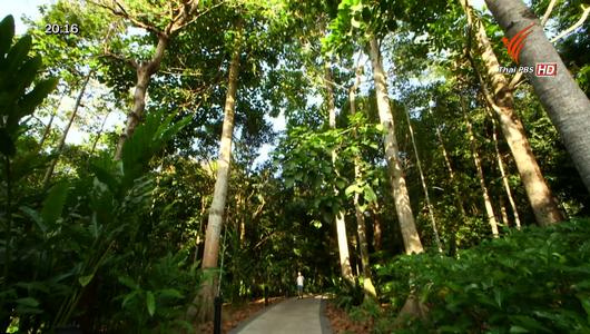 แกลอรีภาพ สวนพฤกษศาสตร์สิงคโปร์