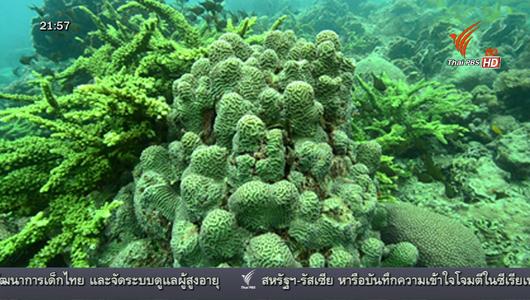 แกลอรีภาพ ตัวอย่างดูแลทรัพยากรท้องถิ่นเกาะเต่า