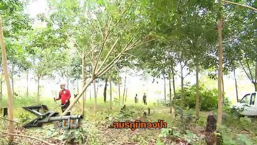 แกลอรีภาพ สมรภูมิทวงป่า