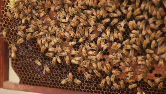 แกลอรีภาพ เทคโนโลยีการผลิตแยมน้ำผึ้ง