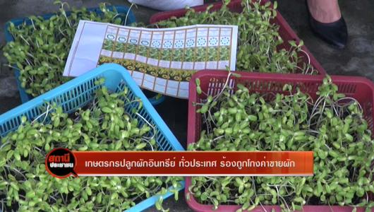 แกลอรีภาพ เกษตรกรปลูกผักอินทรีย์ ทั่วประเทศ ร้องถูกโกงค่าขายผัก