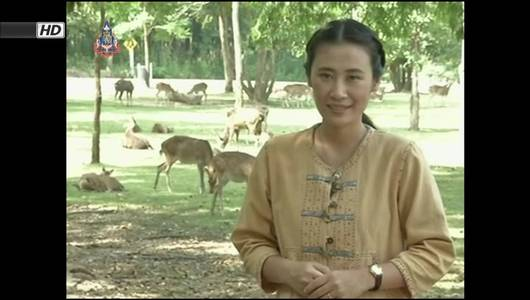แกลอรีภาพ ทีวีจอเหนือ : ปัญหาบุกรุกป่าขยายวงกว้าง